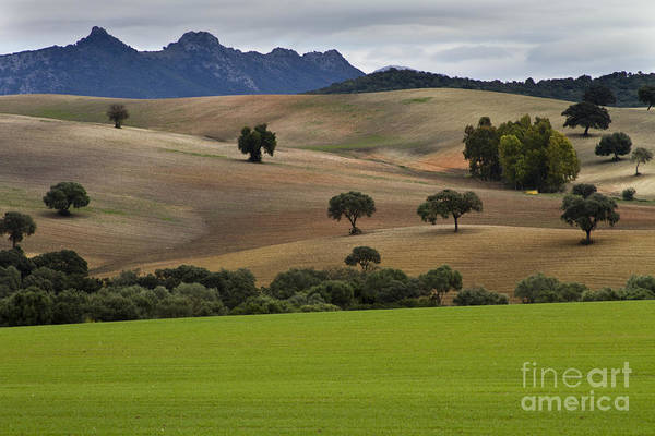 Photograph - Pasture Land In Analusia by Heiko Koehrer-Wagner