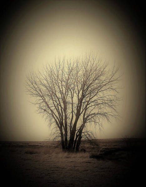 Wall Art - Photograph - Pasture Tree II by Toni Grote