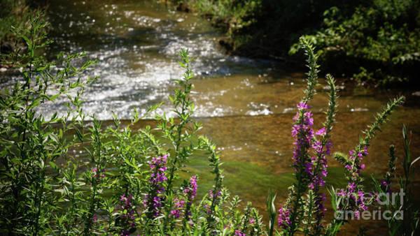 Photograph - Pasture Upstream by Cj Mainor