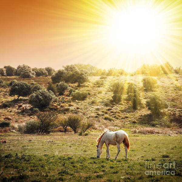 Beautiful Horse Wall Art - Photograph - Pasturing Horse by Carlos Caetano