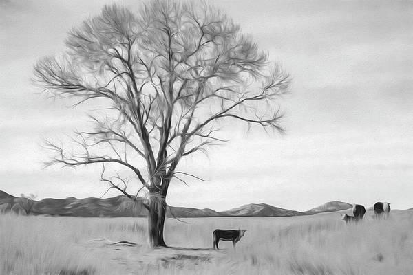 Photograph - Patagonia Pasture Bw by Teresa Wilson
