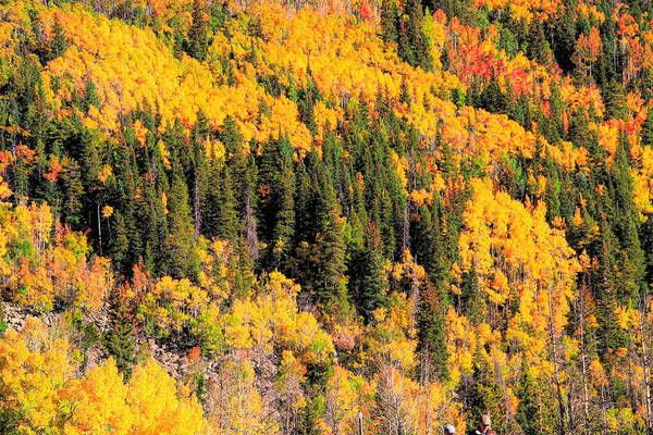 Photograph - Patches Of Color In The Rocky Mountains Colorado by Dan Sproul