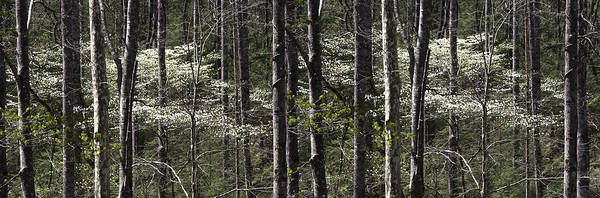 Photograph - Patchwork Dogwood Panorama by Jim Dollar