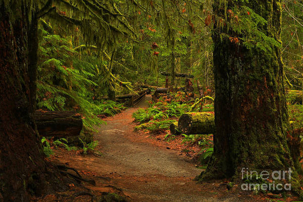 Photograph - Path Between The Giants by Adam Jewell