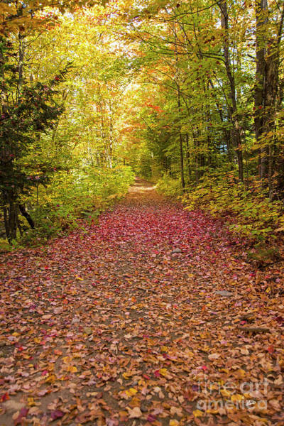 Photograph - Path Covered In Leaves by Alana Ranney
