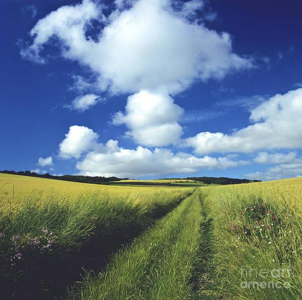 Agrarian Wall Art - Photograph - Path In A Countryside by Bernard Jaubert