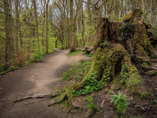 Wall Art - Photograph - Path In Judy Woods by Mike Walker