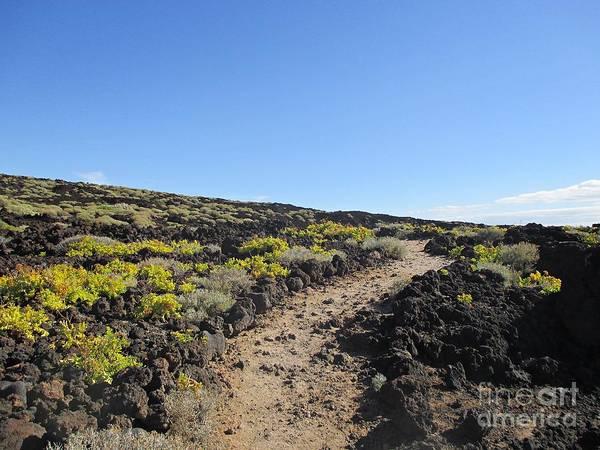 Photograph - Path In Malpais De Guimar by Chani Demuijlder