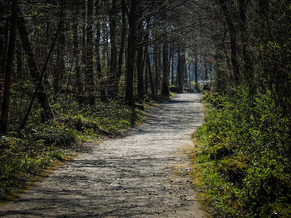 Photograph - Path In The Woods Of Ireland's Coole Park by James Truett