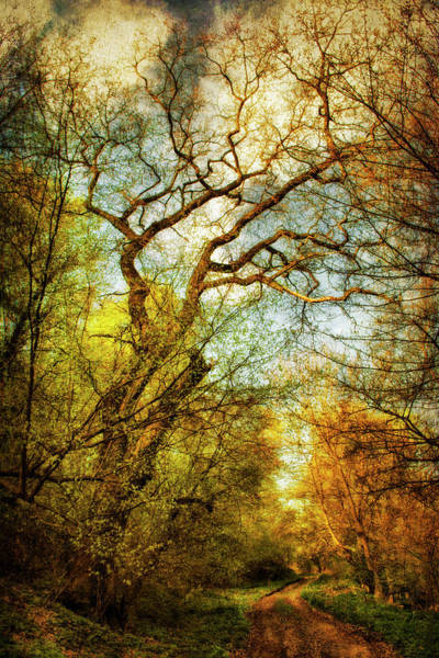 Digital Art - Path In The Woods by Peter Fodor