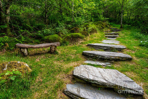 Wall Art - Photograph - Path Into The Forest by Adrian Evans
