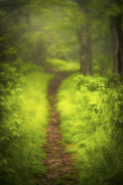 Photograph - Path by Joye Ardyn Durham