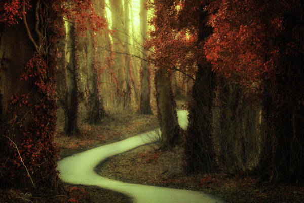Wall Art - Photograph - Path Of Dreams by Martin Podt