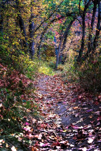 Path Of Leaves Art Print