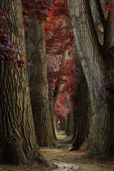 Wall Art - Photograph - Path Of The Snake by Martin Podt
