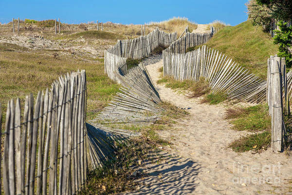 Photograph - Path Through The Dunes by Heiko Koehrer-Wagner