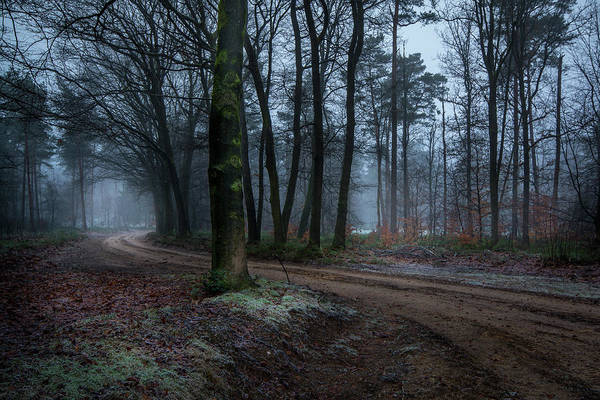 Photograph - Path Through The Forrest by Mario Visser