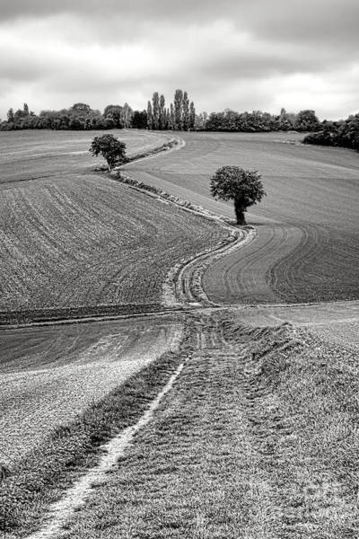 Photograph - Path Through The French Countryside by Olivier Le Queinec