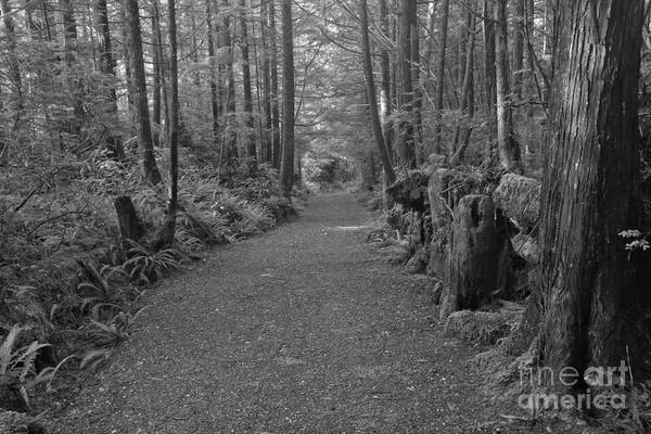 Photograph - Path Through The Pacific Rim - Black And White by Adam Jewell