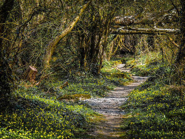 Photograph - Path Through Yeats' Fairy Forest by James Truett