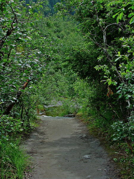 Photograph - Path To Adventure by Diana Hatcher