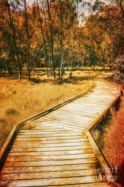 Photograph - Path To Autumn Marshlands by Jorgo Photography - Wall Art Gallery