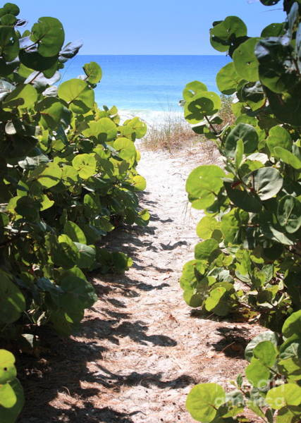 Photograph - Path To Beach by Carol Groenen