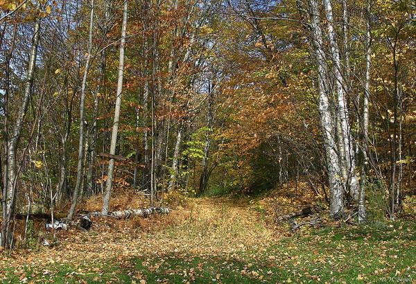 Photograph - Path To Joiner Brook by Deborah Benoit