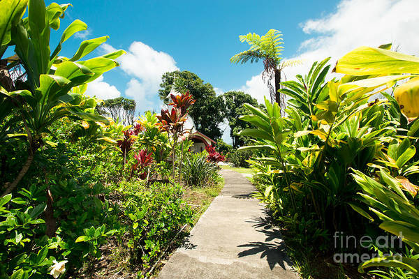 Photograph - path to Our Lady of Fatima Shrine and  White Coral Miracle Church Tropical Garden Wailua Maui Hawaii by Sharon Mau