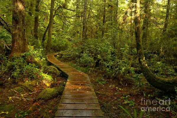 Photograph - Path To Serenity by Adam Jewell