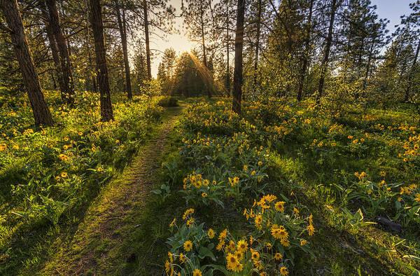 Spokane Photograph - Path To The Golden Light by Mark Kiver