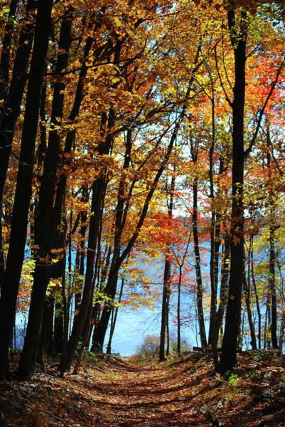 Photograph - Path To The Lake by Lori Tambakis