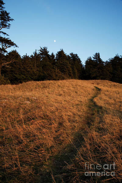 Photograph - Path To The Moon by Charmian Vistaunet