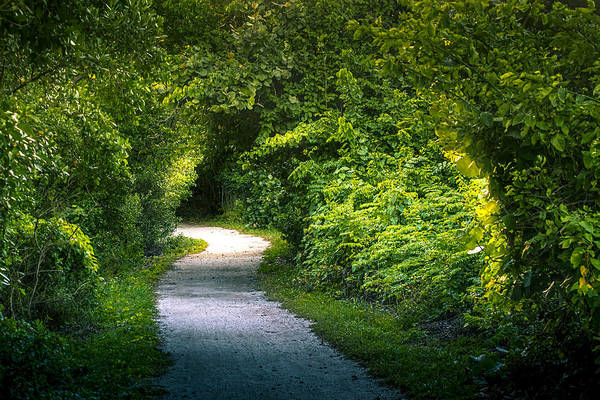 Hiking Path Photograph - Path To The Secret Garden by Marvin Spates