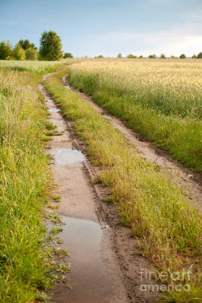 Wall Art - Photograph - Path With Puddles In Fields by Arletta Cwalina