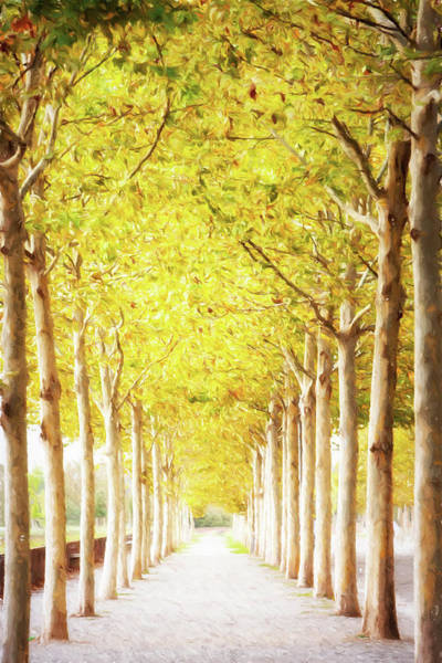 Wall Art - Photograph - Pathway Lined With Trees Artistic Painting by Susan Schmitz