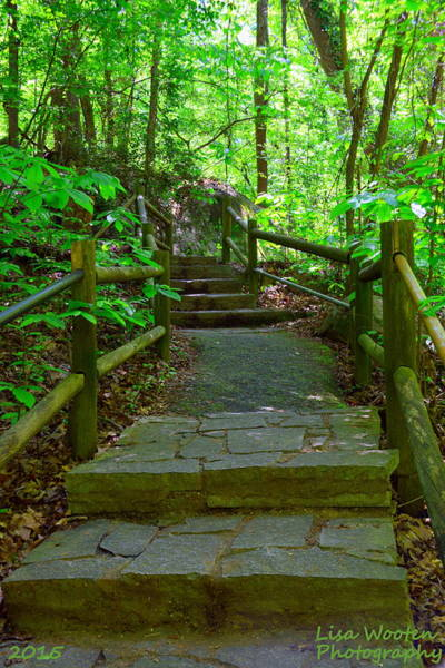 Photograph - Pathway To Nature by Lisa Wooten