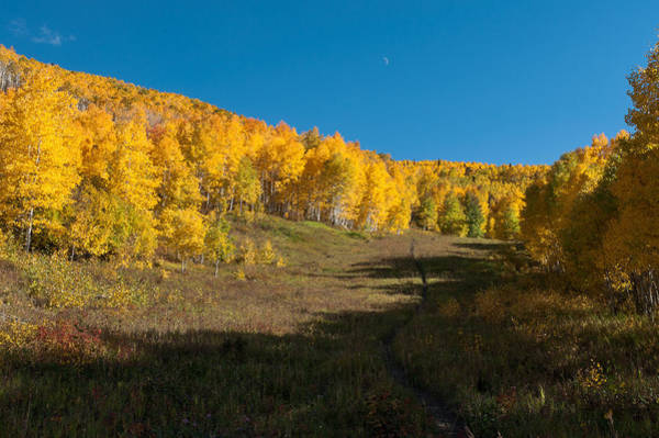 Grand Mesa National Forest Photograph - Pathway To The Gold by John Bartelt