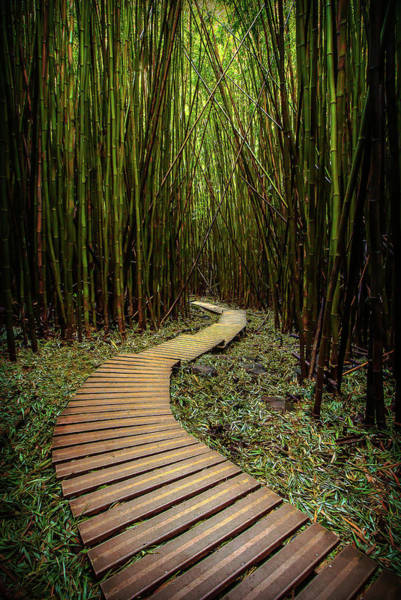 Photograph - Pathway To Zen by Ryan Smith