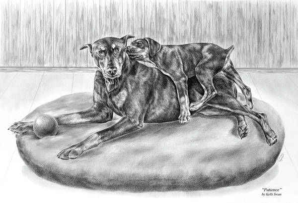 Drawing - Patience - Doberman Pinscher And Puppy Print by Kelli Swan