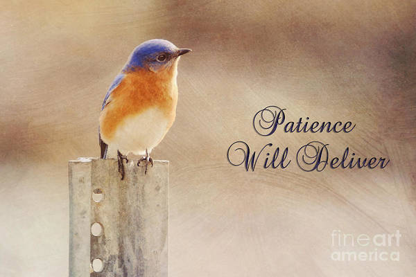 Photograph - Patience Will Deliver by James Hennis