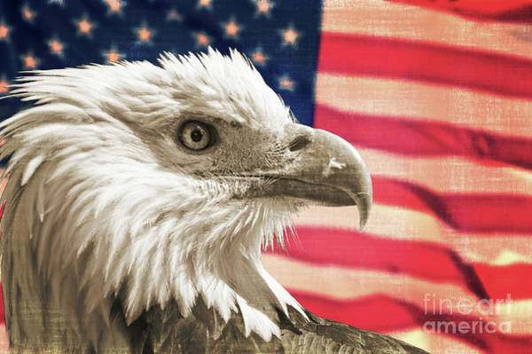 Bald Eagle Photograph - Patriot by Delphimages Photo Creations