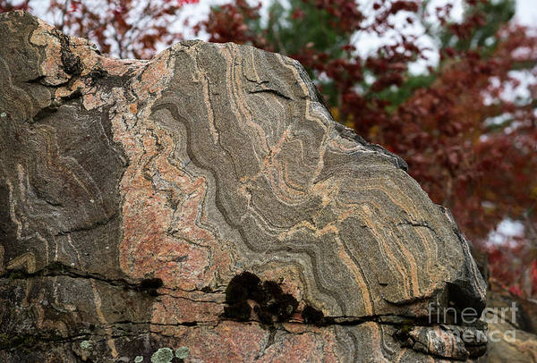 Photograph - Pattern In A Gneiss Rock by Les Palenik