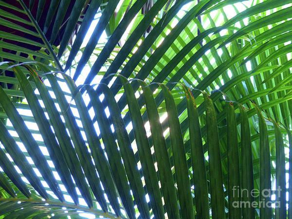 Photograph - Patterned Palms by Rosanne Licciardi