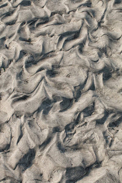 Photograph - Patterns In Sand 4 by William Selander