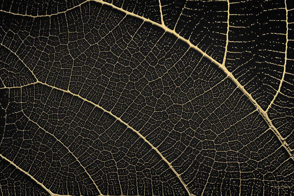 Digital Art - Patterns Of Nature - Leaf Veins In Gold On Black Canvas No. 1 by Serge Averbukh