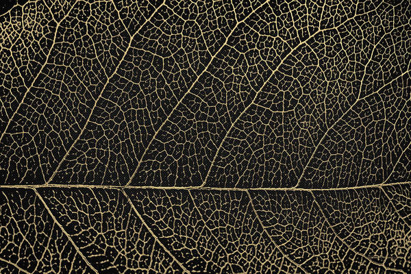 Digital Art - Patterns Of Nature - Leaf Veins In Gold On Black Canvas No. 2 by Serge Averbukh