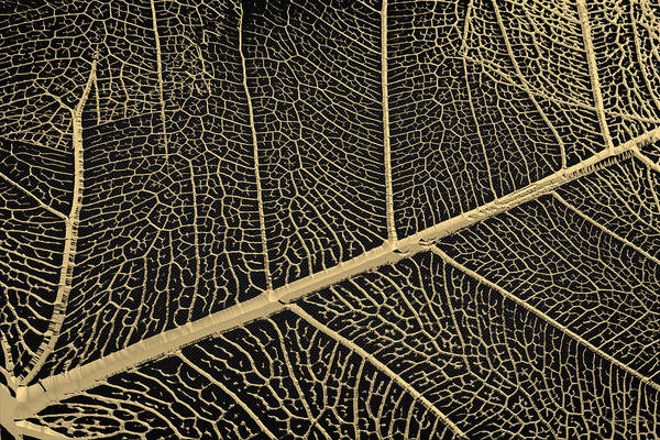 Digital Art - Patterns Of Nature - Leaf Veins In Gold On Black Canvas No. 3 by Serge Averbukh