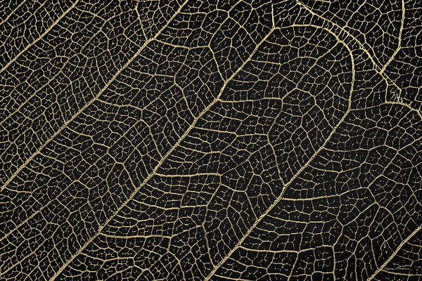 Digital Art - Patterns Of Nature - Leaf Veins In Gold On Black Canvas No. 4 by Serge Averbukh