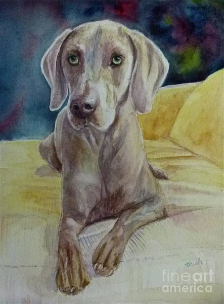 Weimaraner Painting - Paul by Patricia Pushaw